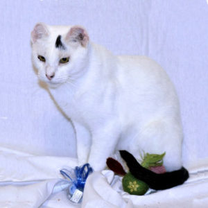 Rosenthal - Adopted!